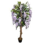 Find the Top-Quality Natural Wisteria Tree at Competitive Prices