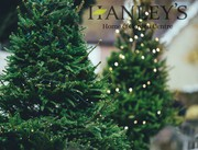 Decor Your Place With Christmas Trees This Festive Season